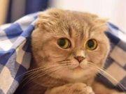 十二生肖为什么没有猫?和玉帝可没什么关系